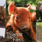 「 ビッグ・リトル・ファーム 」考察レビュー、夫婦が究極の農場を作るまでを描いたドキュメンタリー