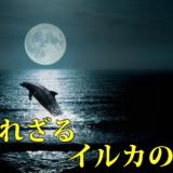 Disney+ (ディズニープラス)映画「 知られざるイルカの世界 」ネタバレあり解説、あまりに美しく叙情的な光景に癒されるよ