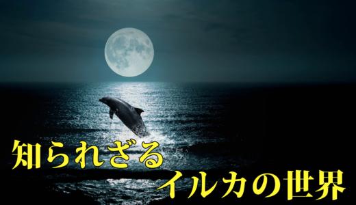 【 ディズニープラス 】「 知られざるイルカの世界 」考察レビュー、あまりに美しく叙情的な光景に癒されるよ