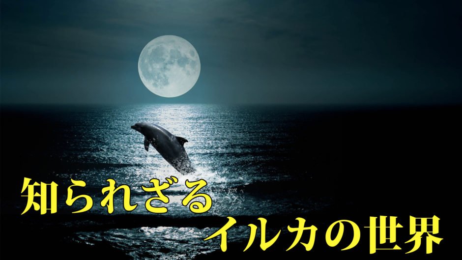 知られざるイルカの世界