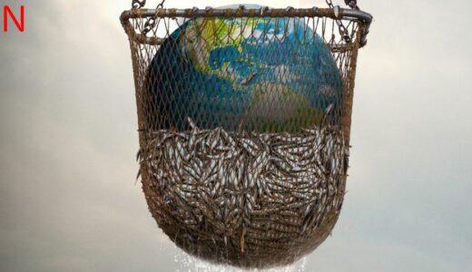【 Netflix おすすめ 】「 Seaspiracy 偽りのサステイナブル漁業 」生態系を守るには魚を食べない選択肢が必要である